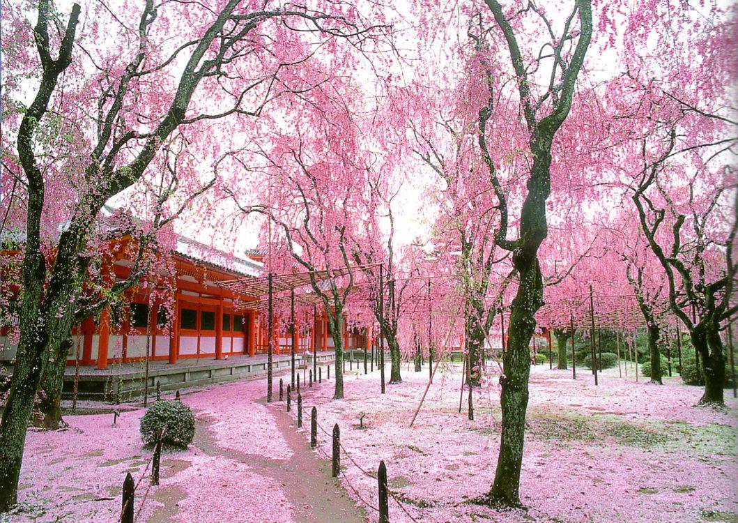 Jardins japonais les fleurs jardins du japon et d for Jardin kyoto
