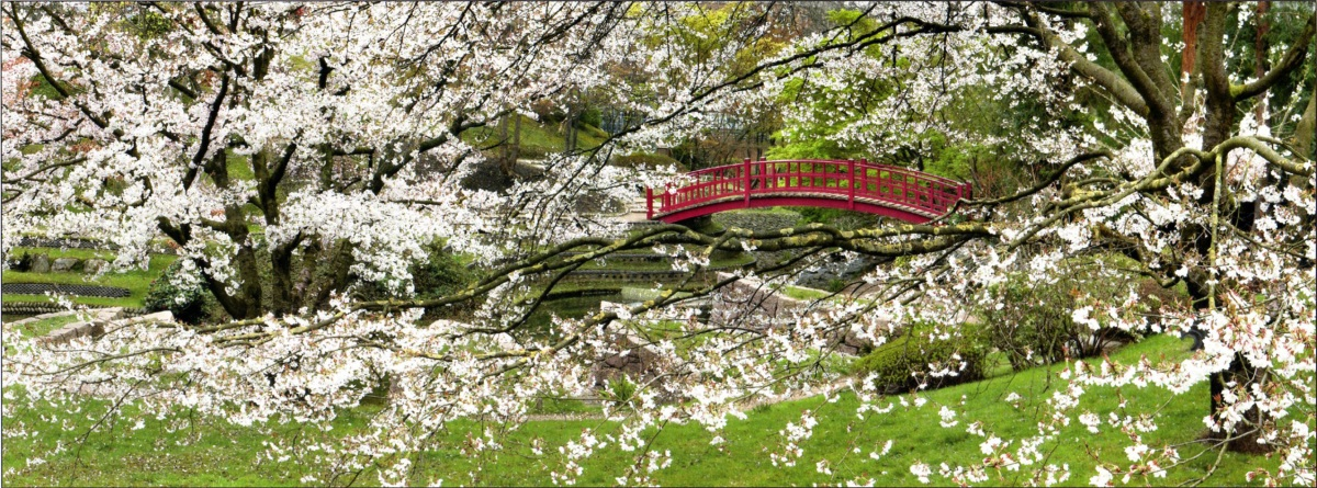 Printemps au jardin albert kahn jardins du japon et d 39 ailleurs - Greffe du cerisier au printemps ...