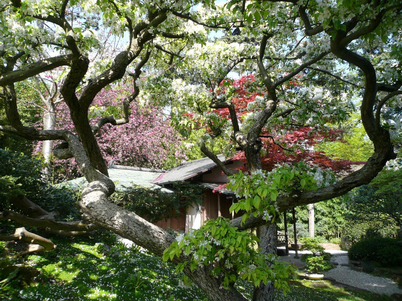 Printemps au jardin albert kahn jardins du japon et d - Les jardins au bout du monde outdoor furniture ...