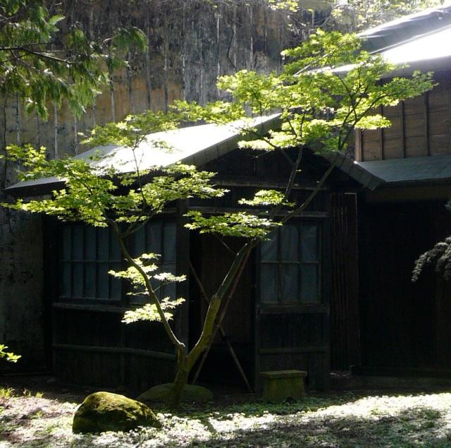 printemps au jardin albert kahn jardins du japon et d. Black Bedroom Furniture Sets. Home Design Ideas