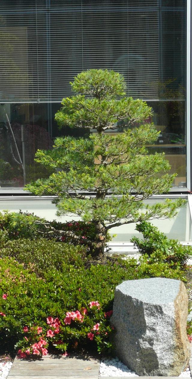 Arts et techniques du jardin japonais