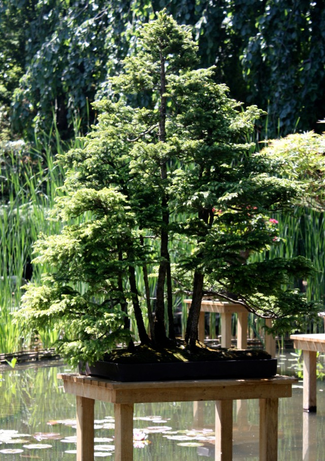 301 moved permanently Jardin japonais bonsai