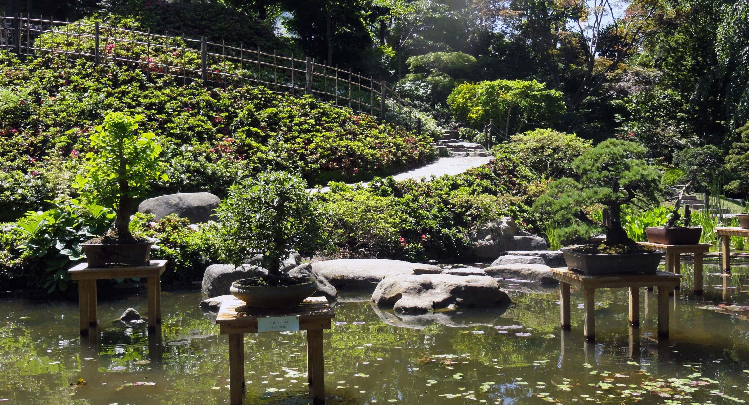 Bonsa s aux jardins albert kahn jardins du japon et d - Jardin de bonsais ...