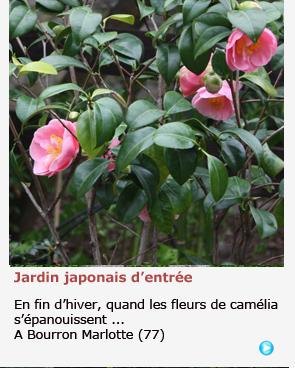 JARDIN JAPONAIS A BOURRON MARLOTTE