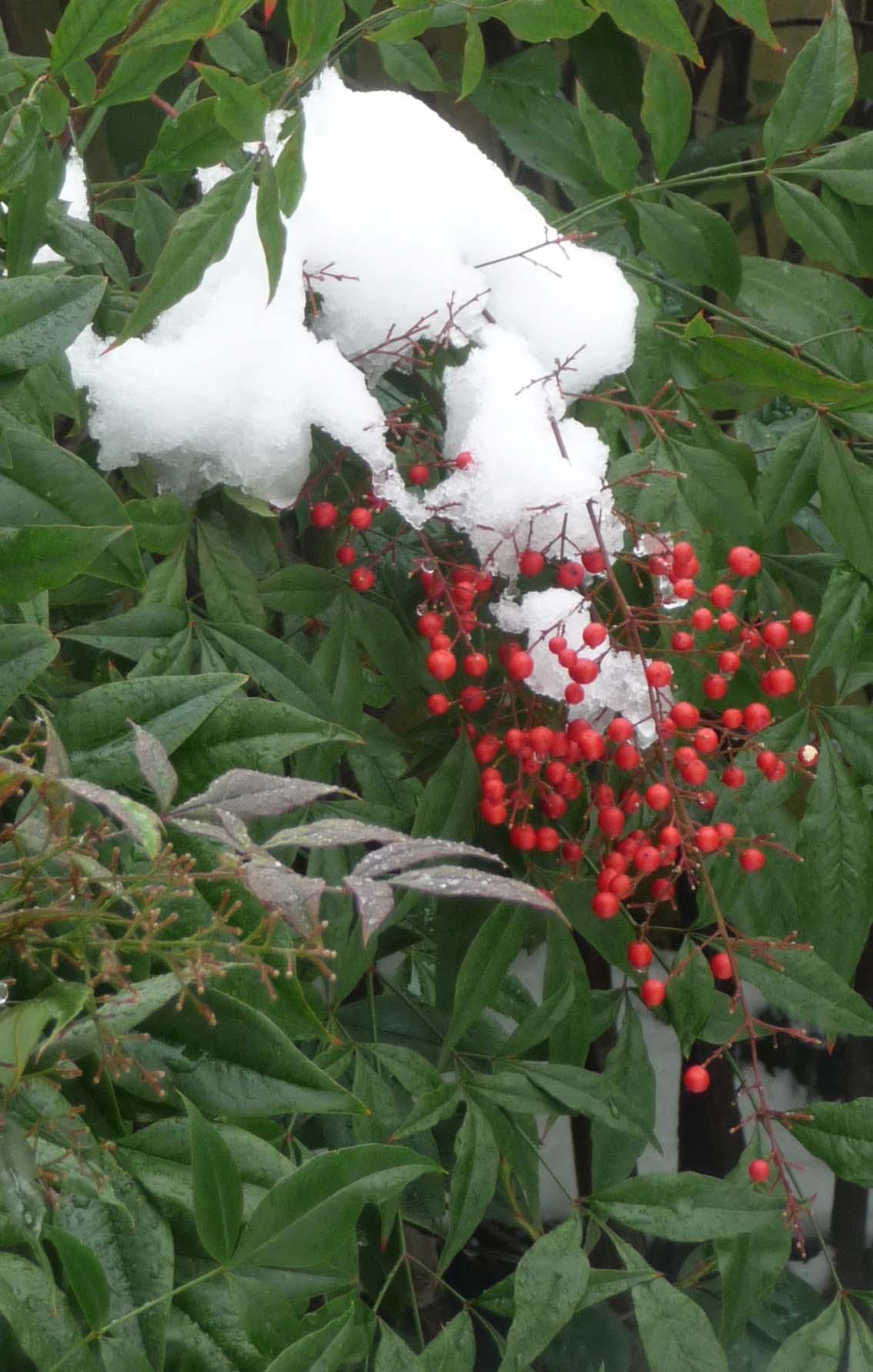 Jardin japonais albert kahn sous la neige jardins du for Albert kahn jardin japonais