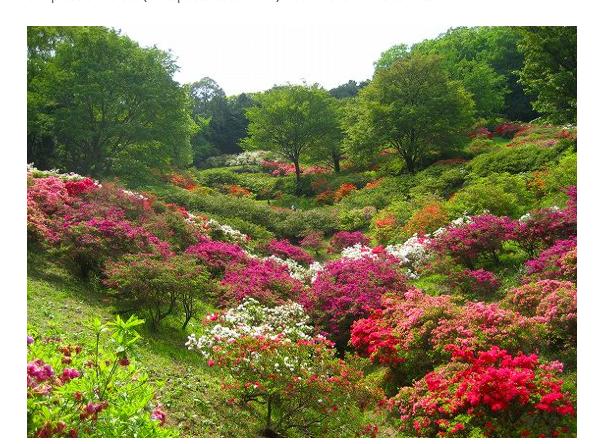 Jardin japonais photos sites et blogs jardins du for Le jardin japonais sophie walker