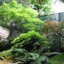 Neuilly-sur-Seine - Ambiance de jardin d'ombre : érables du Japon, andromède, azalées et camélia
