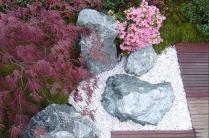 Composition minérale et végétale - Erable japonais pourpre et azalées japonaises roses