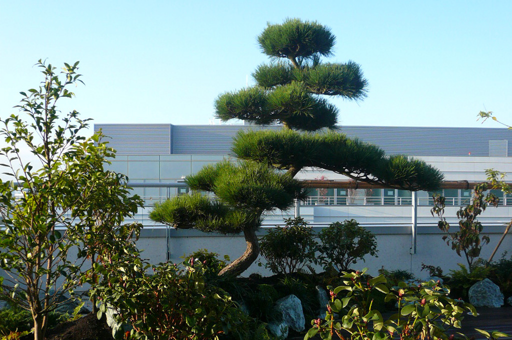 301 moved permanently for Pin jardin japonais