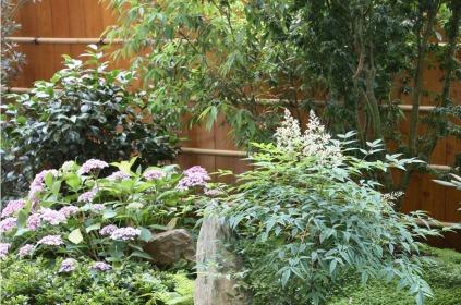 Une riche palette végétale avec une majorité de plantes persistantes : chêne à feuilles de myrzine, nandina domestica, camélia, azalées, helxine.