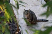 Voici Yogi qui a donné son nom au jardin