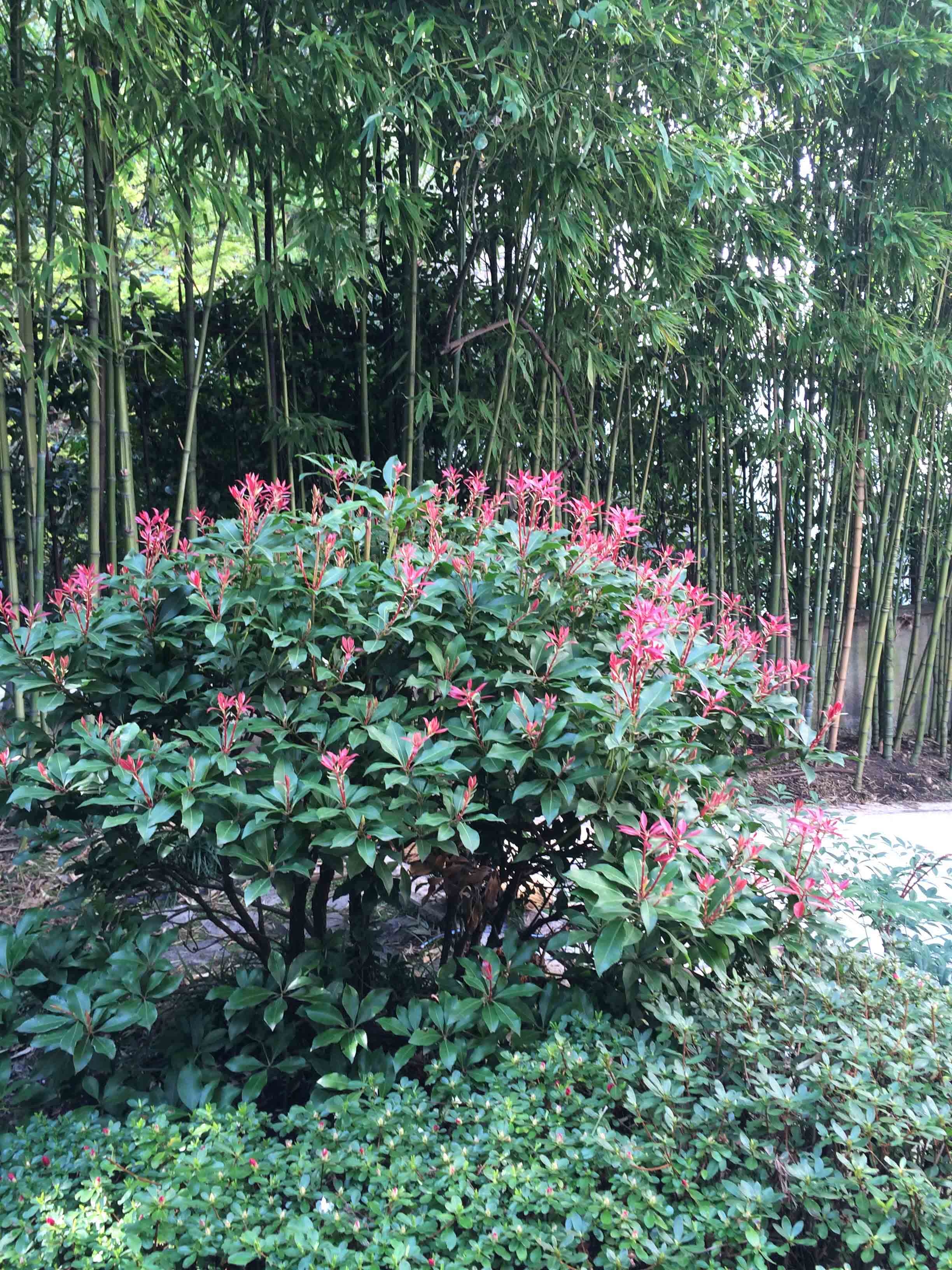 Jardins japonais fleurs de printemps jardins du japon for Fleurs jardin printemps