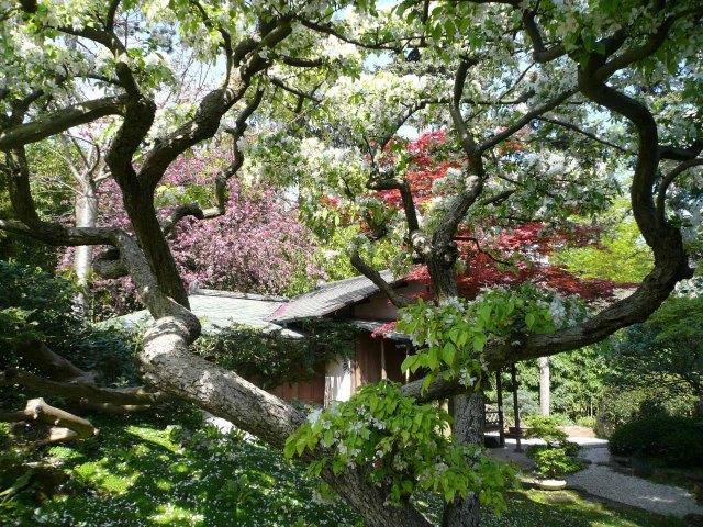 Jardin Albert Kahn au printemps