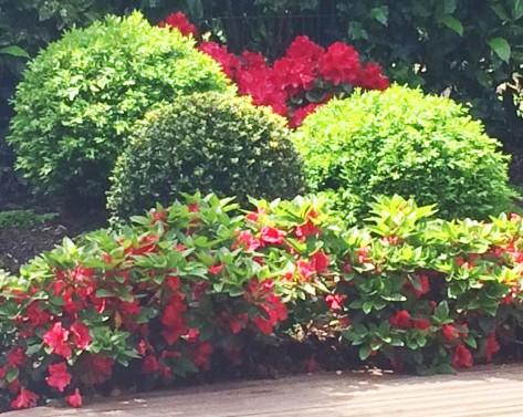 Jardin japonais rouge en fleur