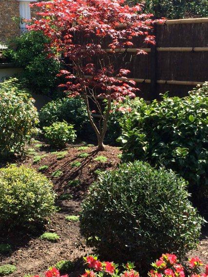 Jardin japonais rouge intérieur du jardin