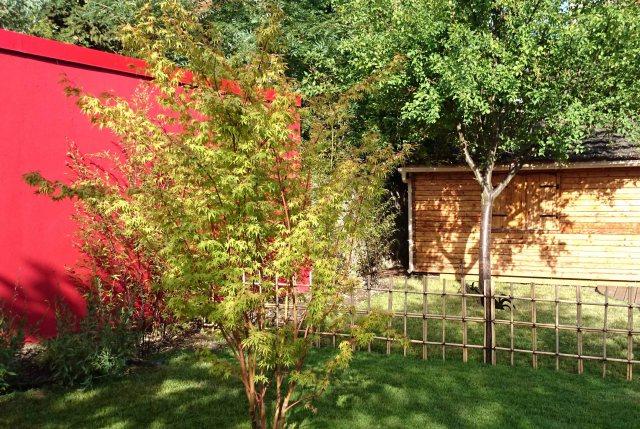 Jardin japonais rouge mur rouge et érable
