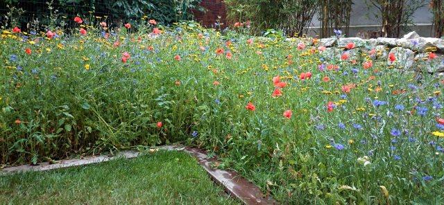 Jardin japonais rouge prairie fleurie