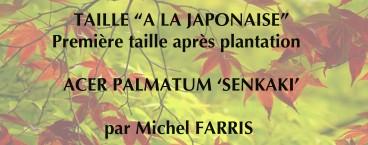 Taille de l erable du japon jardins du japon et d 39 ailleurs - Comment tailler un erable ...